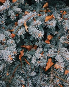 A pine tree and leaves.